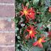 Flowers, Week 46
