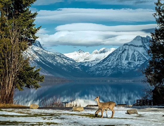 McDonald Lake Deer by 365karly1