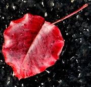17th Nov 2017 - Red