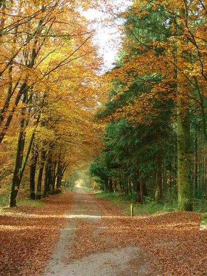 golden forest by gijsje