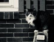 17th Nov 2017 - neighbor cat
