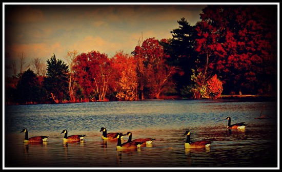 50 Shades Of Fall by moviegal1