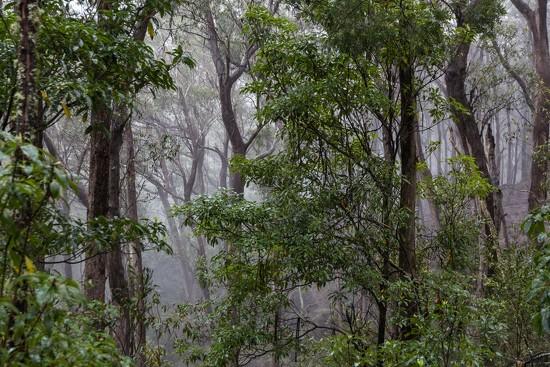 Misty rainforerst by pusspup
