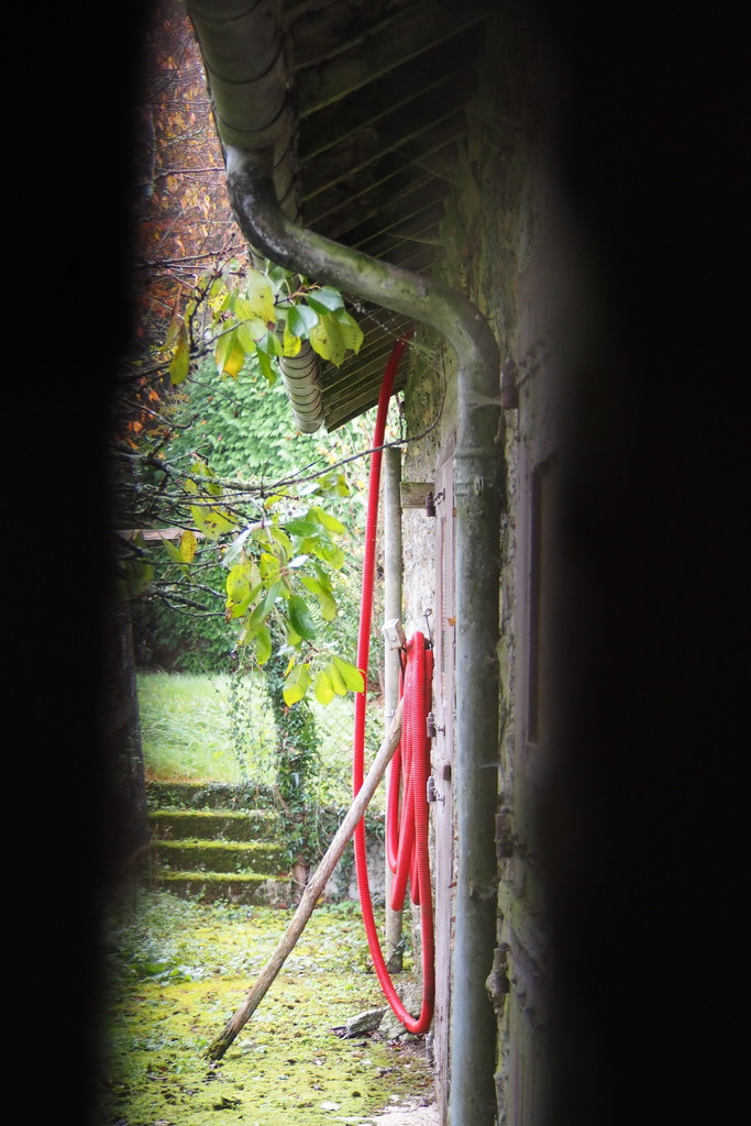 Between the gate's narrow slats... by s4sayer