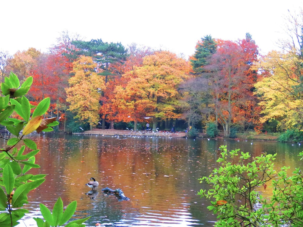 Autumnal Splendour by phil_sandford