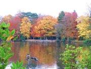 18th Nov 2017 - Autumnal Splendour