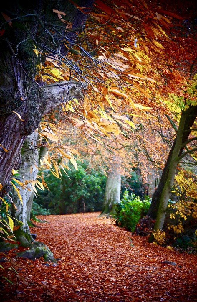 Magical Autumn. by carole_sandford