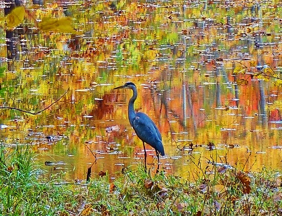 Heron by soboy5