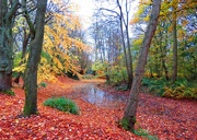 19th Nov 2017 - More Autumn