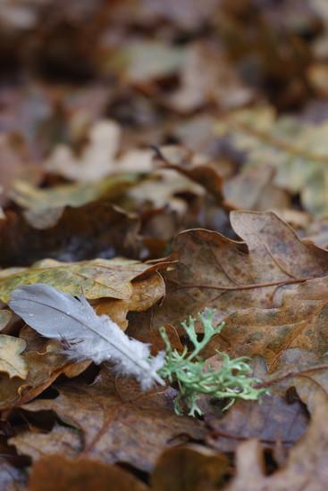 Oak, Lichen and Feafer by 30pics4jackiesdiamond