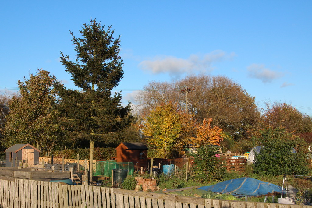 Autumn at the allotment by busylady