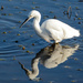 Little Egret at A Cold & Frosty Minsmere by ilovelenses