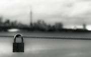 19th Nov 2017 - lock on Toronto