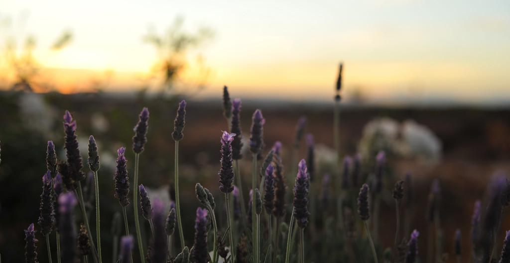 Sunset by loweygrace