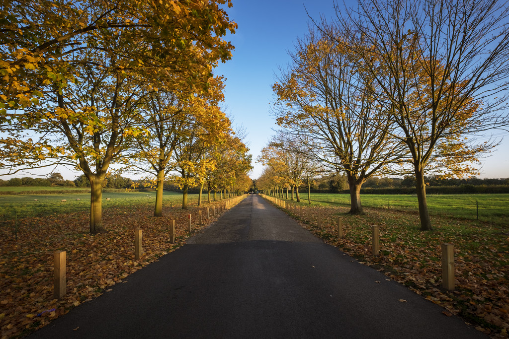 Day 310, Year 5 - Last Signs Of Autumn In Norfolk by stevecameras
