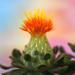 Budding Flower by joysfocus