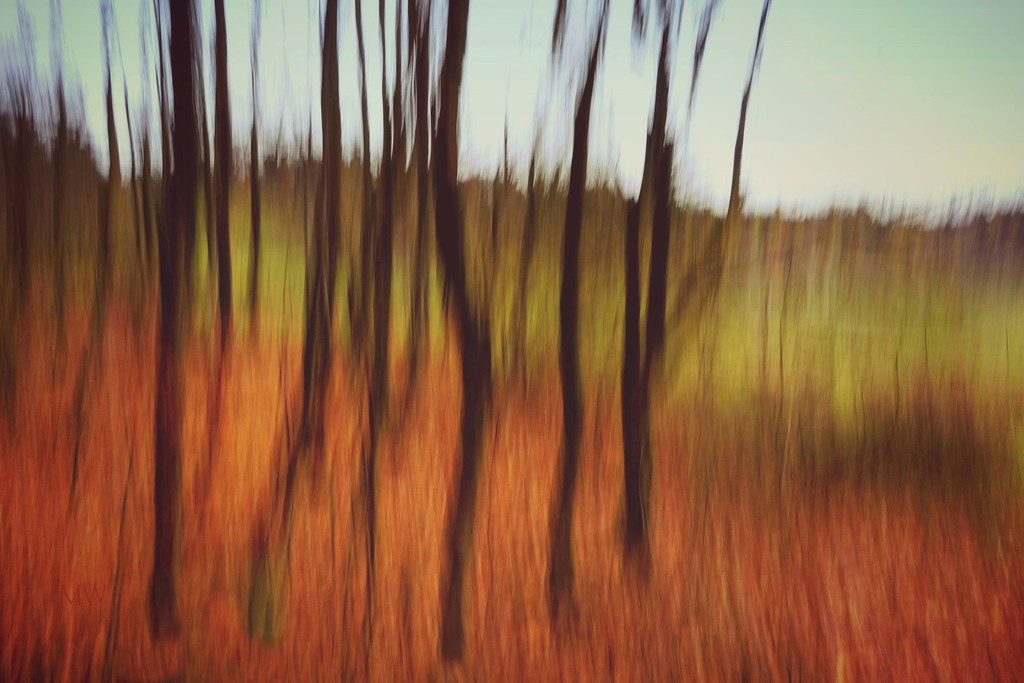 2017-11-20  motion - icm by mona65