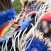 many feathers