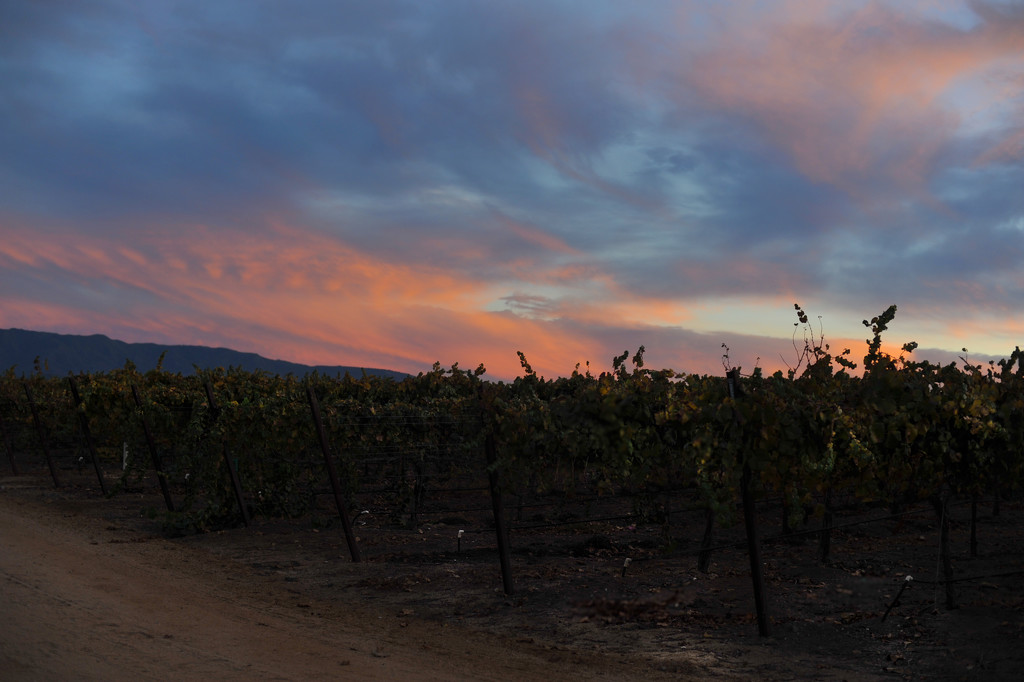 Vines 2 by loweygrace