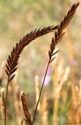 20th Nov 2017 - Swaying Grass