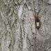 Peek-a-boo squirrel! by fayefaye