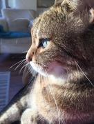 19th Nov 2017 - Cat Sitting