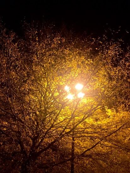 Last Nights of Fall by jnorthington
