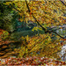 Reflected Autumn Leaves