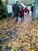 20th Nov 2017 - Walking on a Golden Carpet.