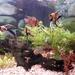 My husband's aquarium