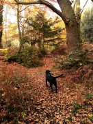 22nd Nov 2017 - Another day another woodland walk