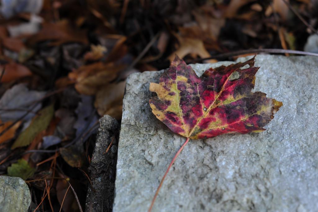 Leaf  by loweygrace