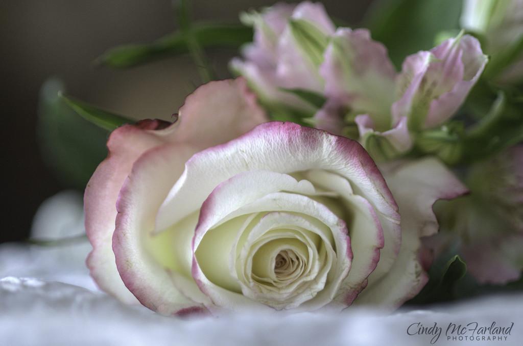 Thankful for God's Beauty by cindymc