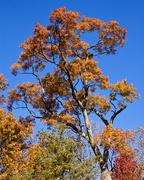 22nd Nov 2017 - Orange tree