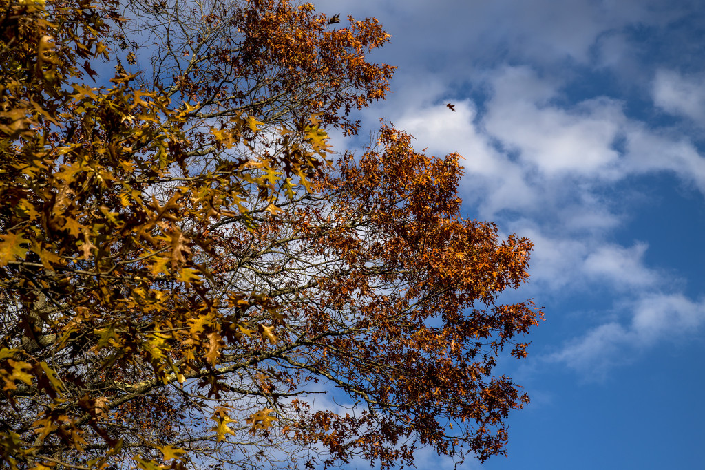 The leaves are still falling by hjbenson