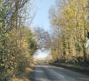 22nd Nov 2017 - Sunny avenue to the South Downs.