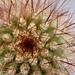 Cactus zoom