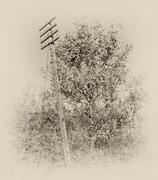 23rd Nov 2017 - Telegraph Pole