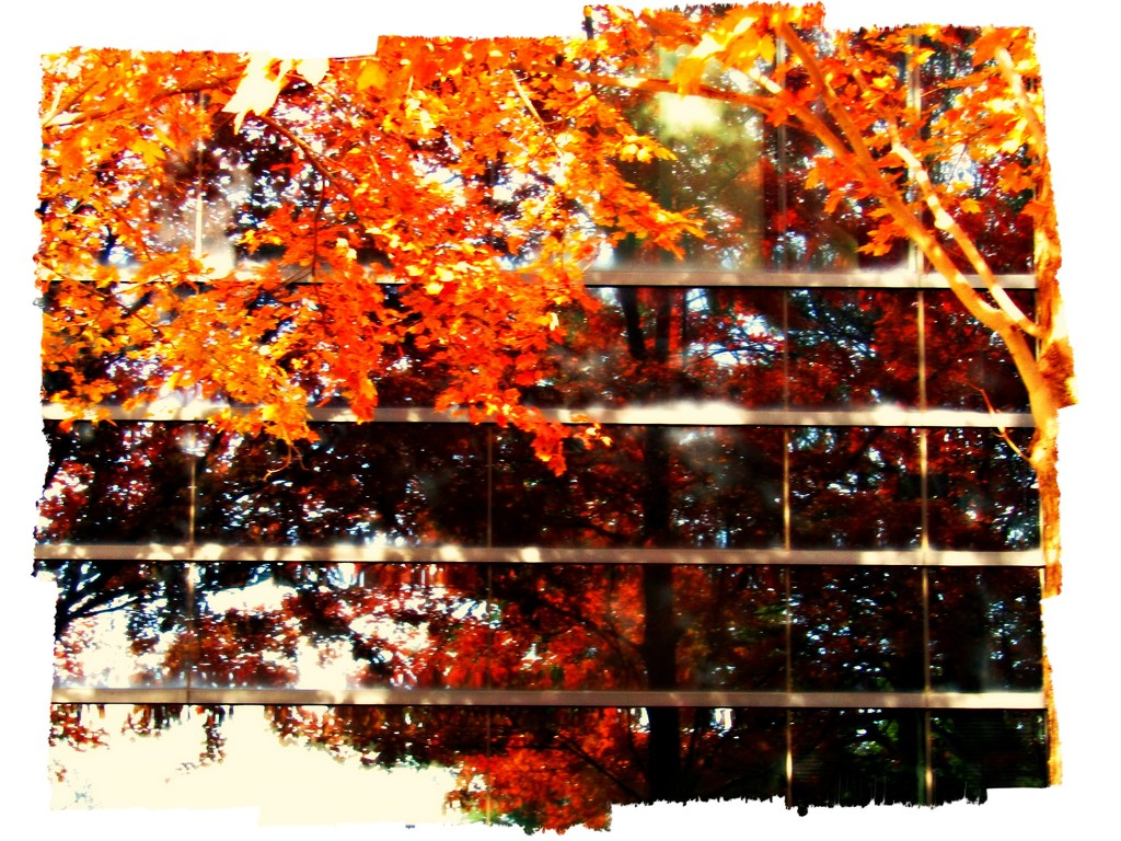Reflections Of Fall by moviegal1