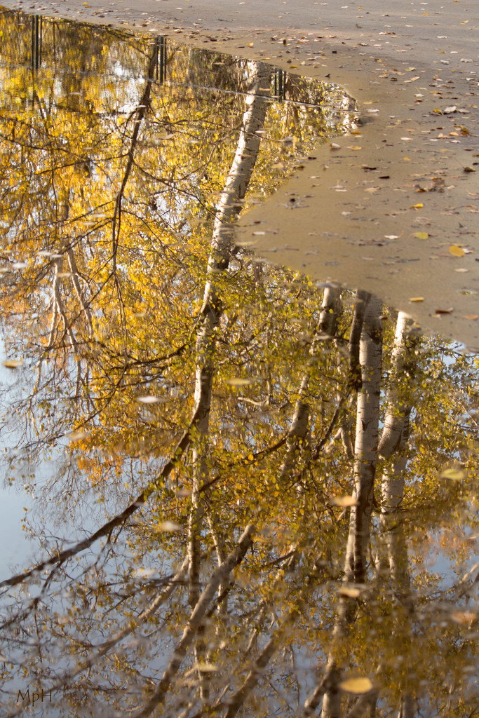 Huge pond by cherrymartina