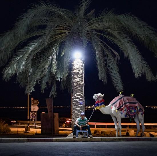 How about a camel ride?   by jyokota