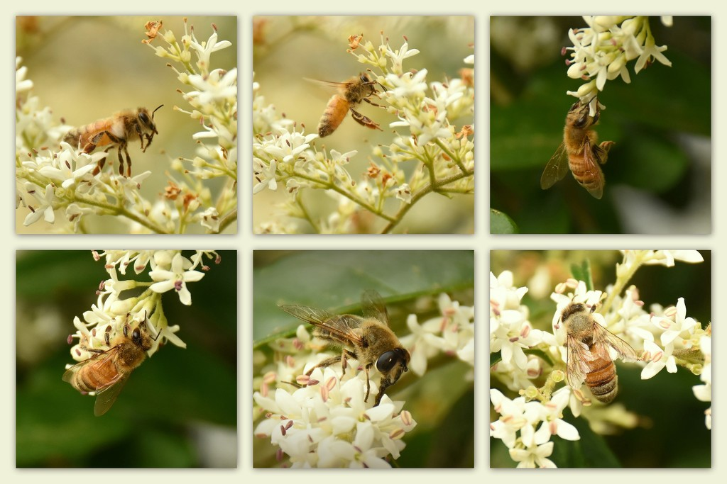 Busy Bees by nickspicsnz