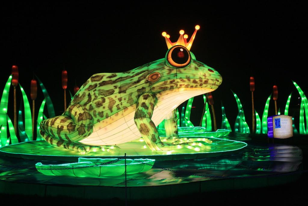 Frog Prince? by jmdspeedy