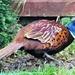 Big Bird by carole_sandford