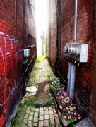 27th Nov 2017 - flowers make even the dingiest alley look quaint.