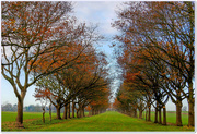 28th Nov 2017 - Autumn Avenue Of Trees