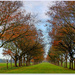 Autumn Avenue Of Trees by carolmw