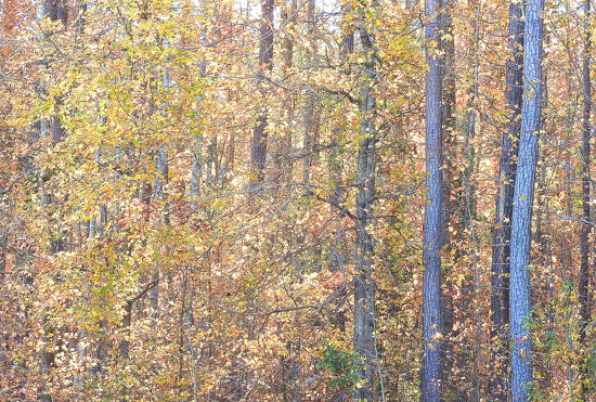 Forest colors by homeschoolmom
