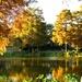 Autumn Cypress by eudora