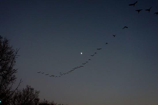 Half a moon by tunia